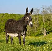 MAM 14 KH0122 01
