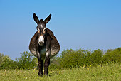 MAM 14 KH0124 01