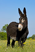 MAM 14 KH0125 01