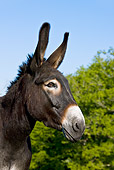 MAM 14 KH0126 01