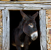 MAM 14 KH0127 01