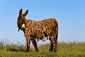 MAM 14 KH0132 01