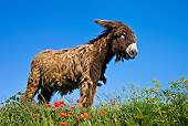 MAM 14 KH0135 01