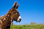 MAM 14 KH0136 01