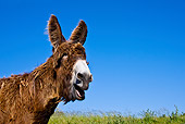 MAM 14 KH0137 01