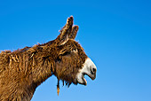 MAM 14 KH0139 01