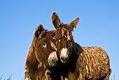 MAM 14 KH0144 01