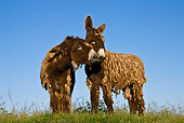 MAM 14 KH0145 01