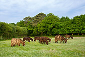 MAM 14 KH0147 01