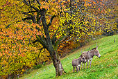 MAM 14 KH0148 01