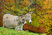MAM 14 KH0149 01