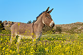 MAM 14 KH0153 01