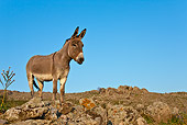 MAM 14 KH0155 01