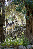 MAM 14 KH0156 01