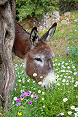 MAM 14 KH0158 01