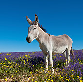 MAM 14 KH0160 01