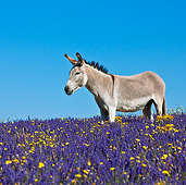 MAM 14 KH0161 01