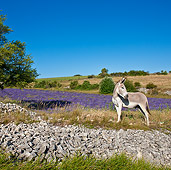 MAM 14 KH0166 01