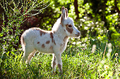 MAM 14 KH0170 01