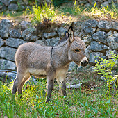 MAM 14 KH0171 01
