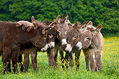 MAM 14 KH0172 01