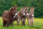 MAM 14 KH0174 01