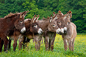MAM 14 KH0175 01