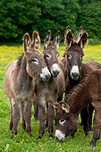 MAM 14 KH0176 01
