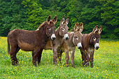 MAM 14 KH0177 01