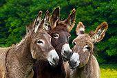 MAM 14 KH0179 01