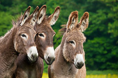 MAM 14 KH0180 01