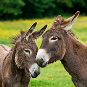 MAM 14 KH0185 01