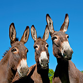MAM 14 KH0189 01