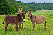 MAM 14 KH0192 01