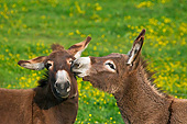 MAM 14 KH0193 01