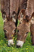 MAM 14 KH0196 01