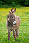 MAM 14 KH0198 01