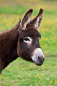 MAM 14 KH0200 01