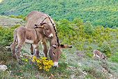 MAM 14 KH0204 01