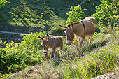 MAM 14 KH0205 01