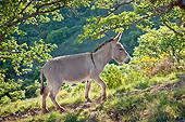 MAM 14 KH0208 01