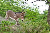 MAM 14 KH0209 01