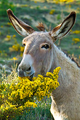 MAM 14 KH0215 01