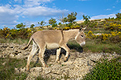 MAM 14 KH0216 01