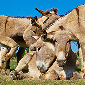 MAM 14 KH0217 01