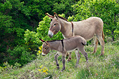 MAM 14 KH0220 01
