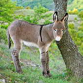 MAM 14 KH0229 01