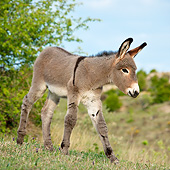 MAM 14 KH0230 01