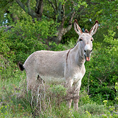 MAM 14 KH0231 01