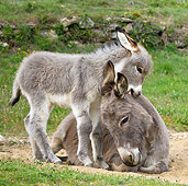MAM 14 KH0235 01